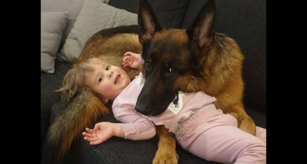 Dog protects Kids