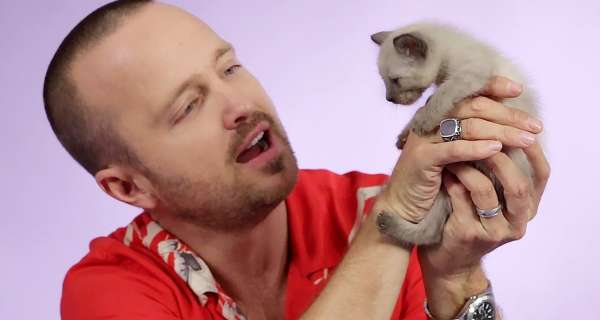 Aaron Paul Plays With Kittens