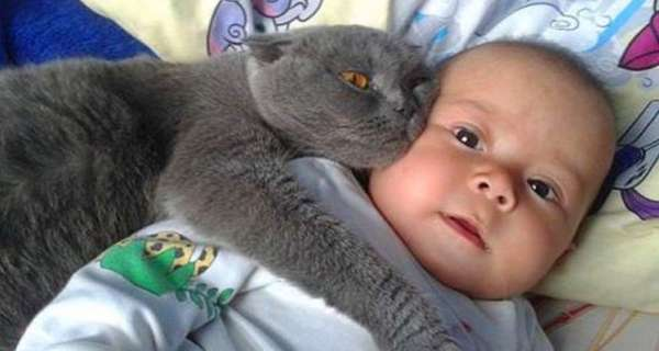 Cats Protecting Babies Videos Compilation 2019 ?